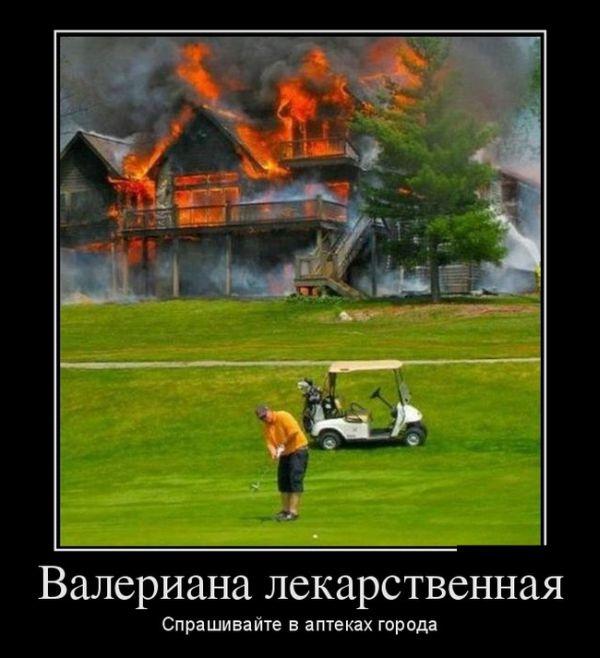 Демотиваторы 30.10.2014 (30 фото)