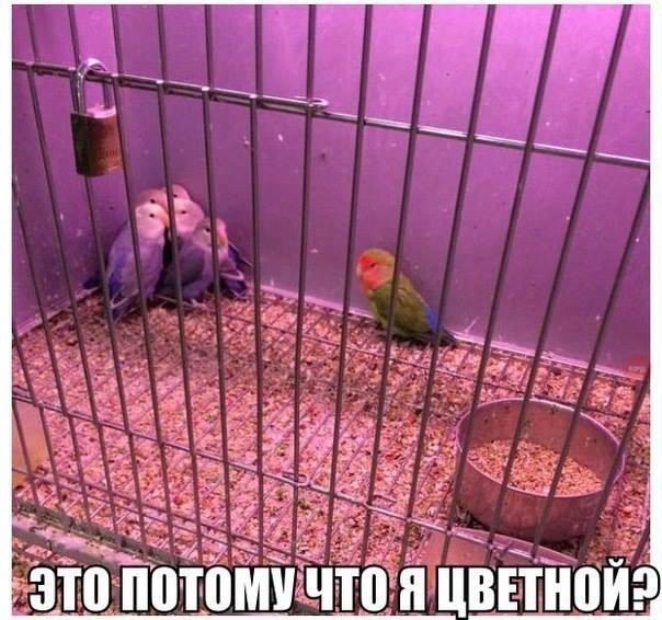 Веселые картинки 31.10.2014 (23 фото)