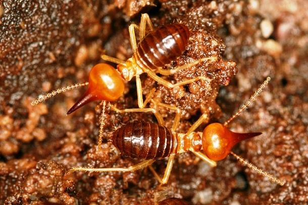 15 занимательных фактов о муравьях (16 фото)