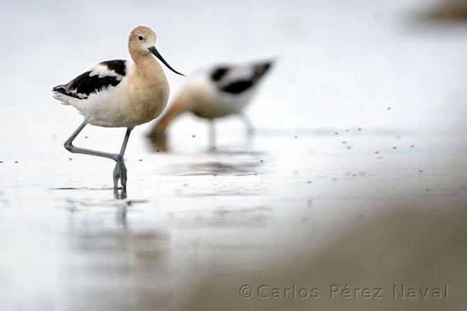 Кто стал победителем конкурса Young Wildlife Photographer 2014 (15 фото)