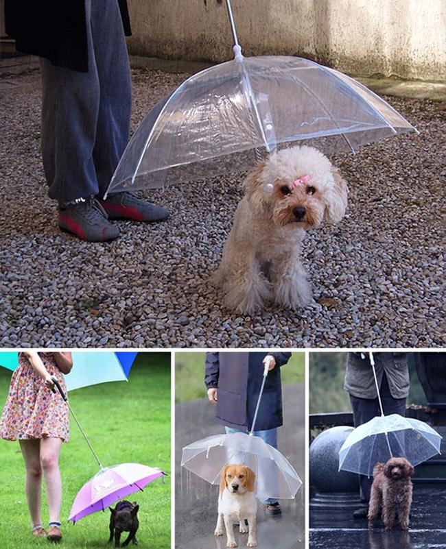 13 бесполезных, но милых изобретений для собак (13 фото)