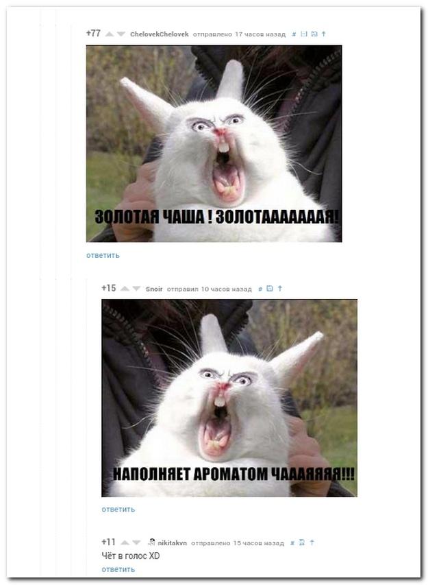Смешные комментарии из социальных сетей от 02.11.2014 (13 фото)
