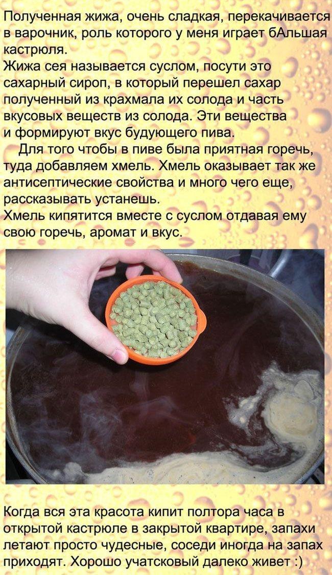 Как приготовить пиво в домашних условиях (13 фото)