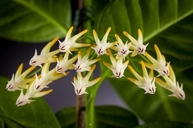 11 комнатных растений, которые украсят любой подоконник (22 фото)