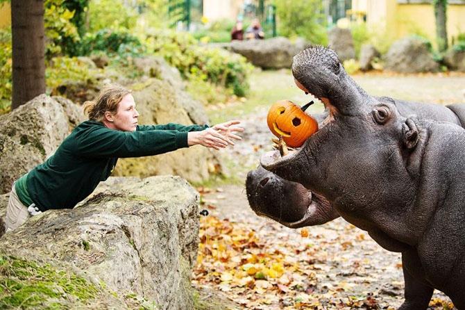 Как прошел Хеллоуин у животных (25 фото)