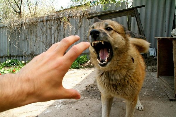 Что делать, если напала собака (3 фото)