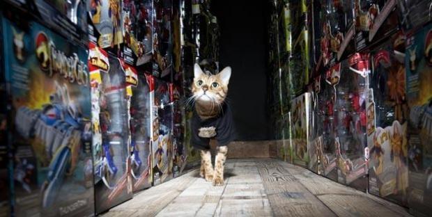 7 животных с необычными профессиями (6 фото + 1 видео)