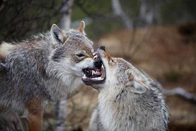 13 самых страшных животных по версии WWF (19 фото)