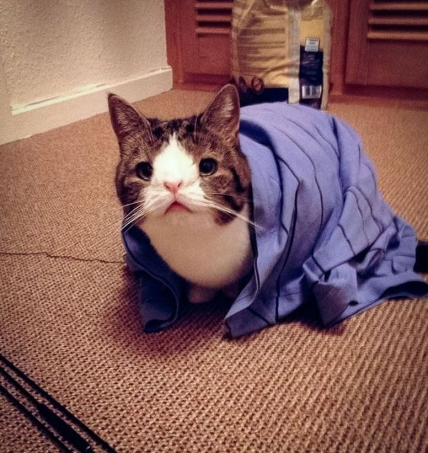 Кот Монти, у которого нет носовой кости (10 фото)
