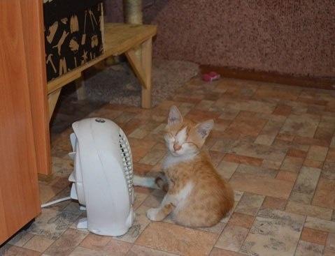 Удивительный пример дружбы животных и обогревателей (10 фото)
