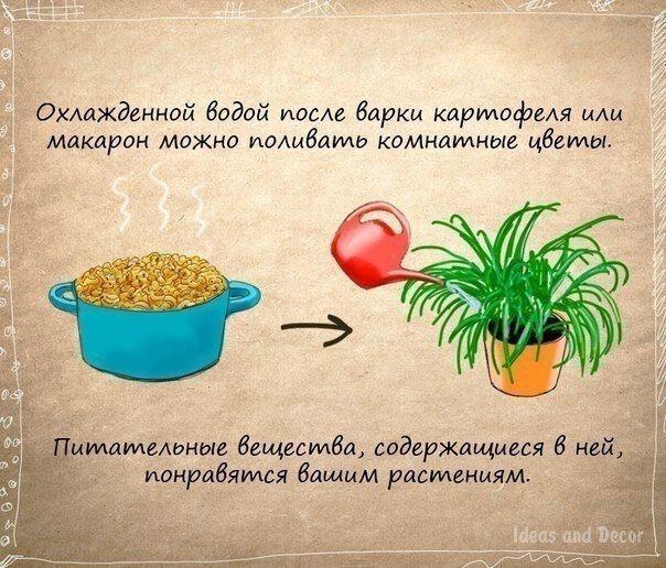 Полезные советы и кулинарные хитрости (7 фото)