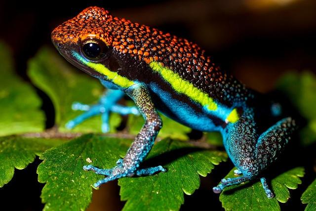 10 удивительных животных тропических лесов (10 фото)