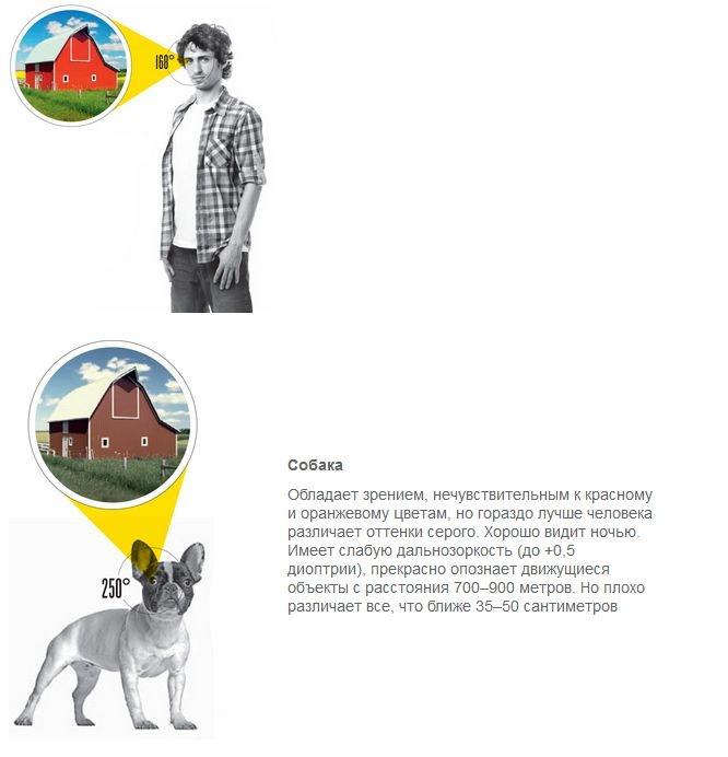 Сравнение зрения человека и животных (4 картинки)