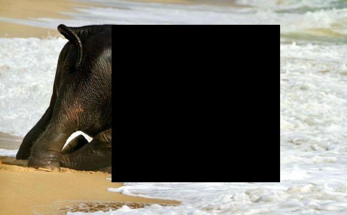 Слоненок впервые попал на пляж (5 фото)