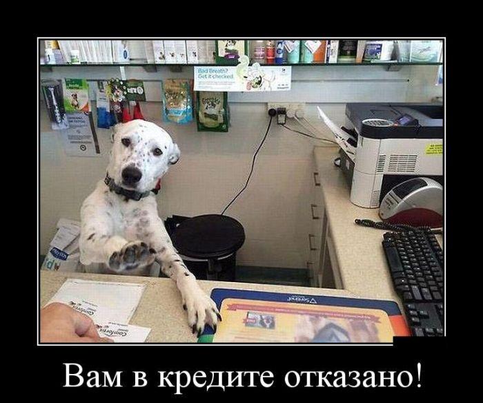 Демотиваторы 13.11.2014 (30 фото)