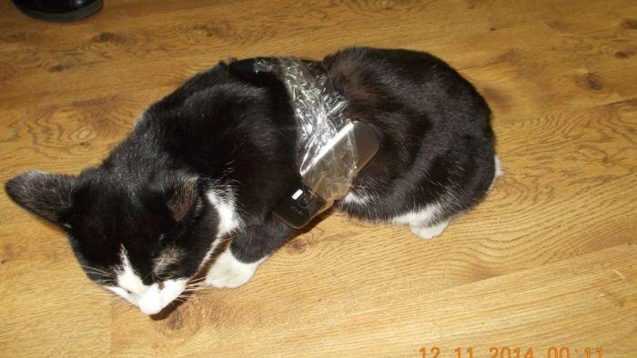 Ухта: кошка с контрабандным грузом была найдена в колонии (4 фото)