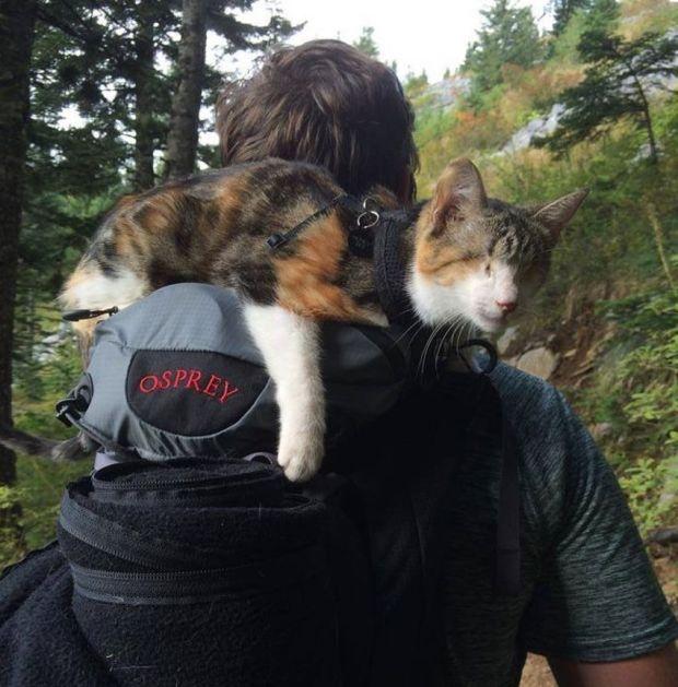 Слепая кошка, которая любит походы (9 фото + 1 видео)