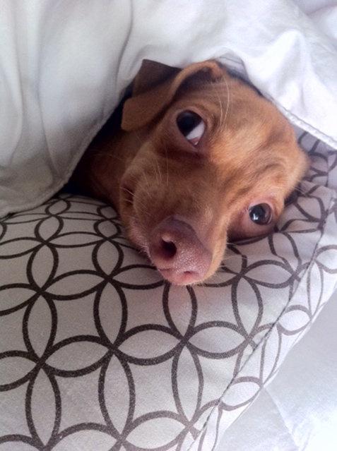 Милая и трогательная собака Туна покорила Интернет (11 фото)