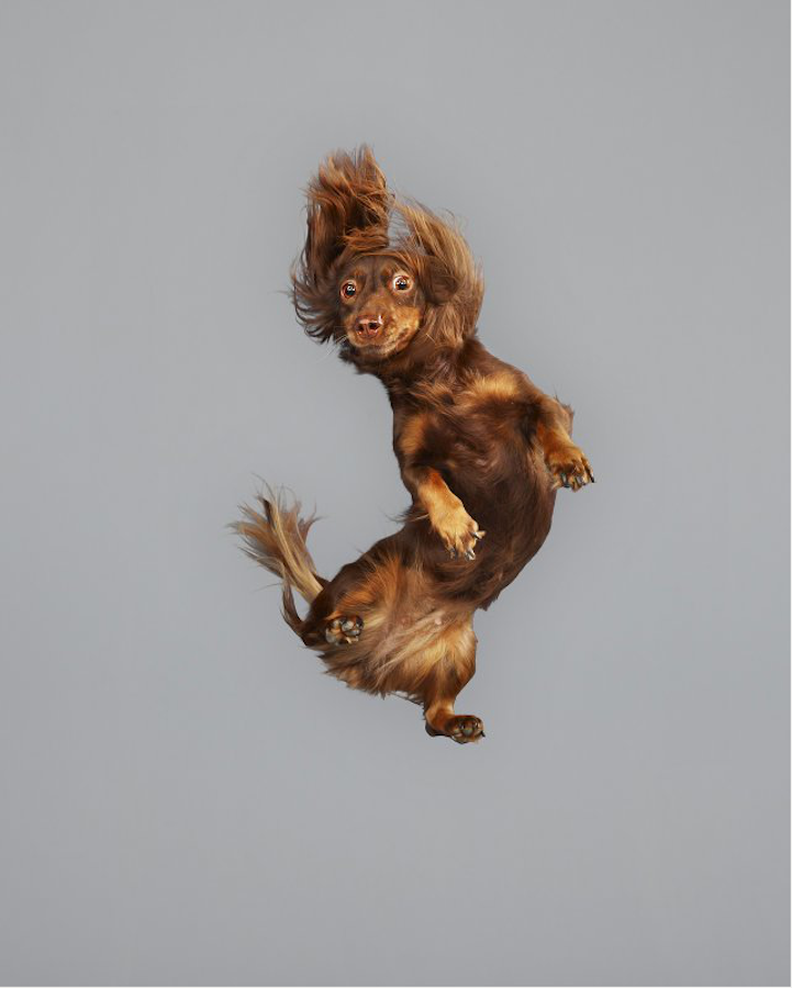 Летающие псы (17 фото)