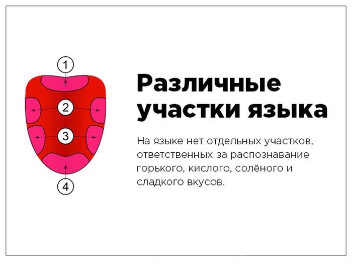 Вся правда о «коротких фактах» в картинках (35 картинок)
