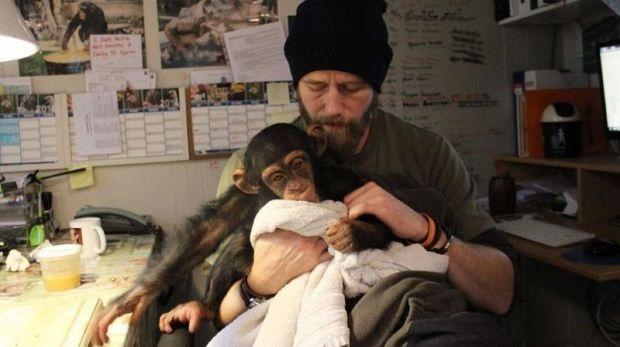 Детеныш шимпанзе растрогал врачей, которые делали операцию его маме (3 фото)