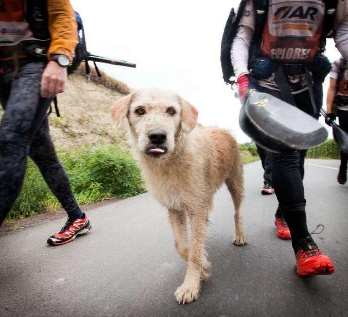 Бездомная собака присоединилась к спортсменам сборной Швеции по мультиспорту (20 фото)