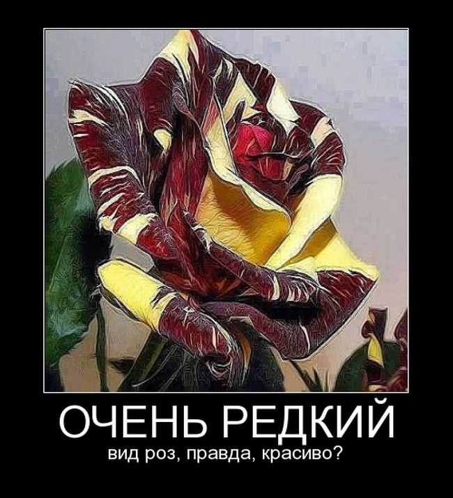 Демотиваторы 20.11.2014 (30 фото)