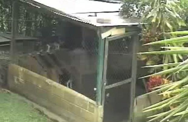 Хозяева долго не могли понять, как их собака выбирается из вольера (1 фото + 1 видео)