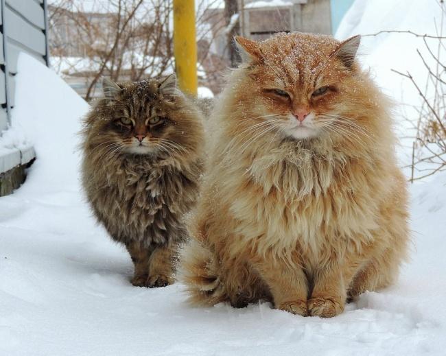 20 животных, которые утеплились к зиме (21 фото)