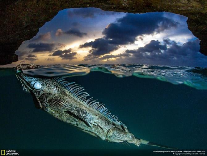 Лучшие фотографии National Geographic 2014 (25 фото)