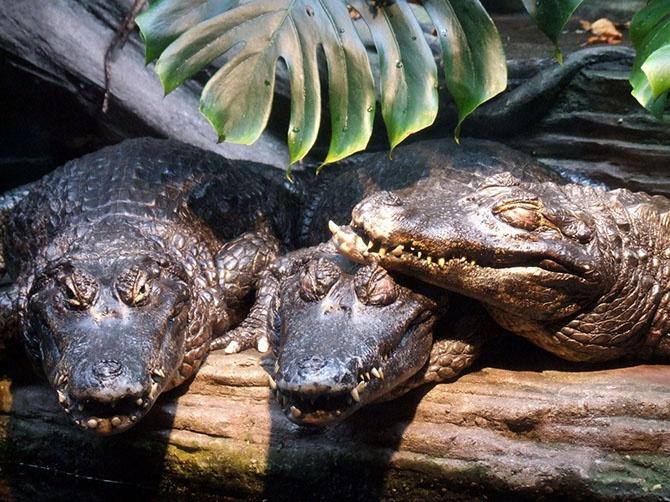 Рейтинг самых опасных существ Амазонии (12 фото)
