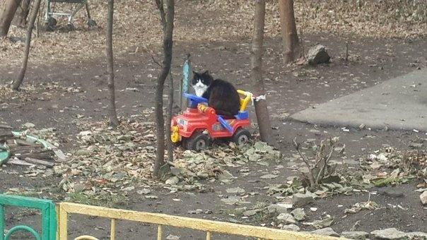 Автомобильные приколы от 24.11.2014 (20 фото)