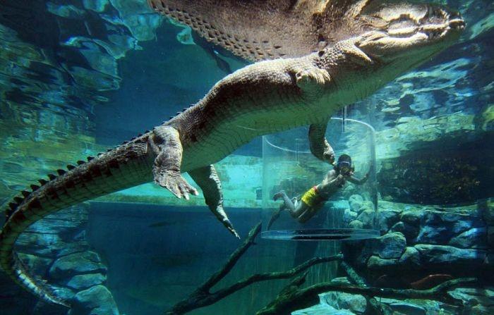 Австралия: экстремальный аттракцион с крокодилами (12 фото)