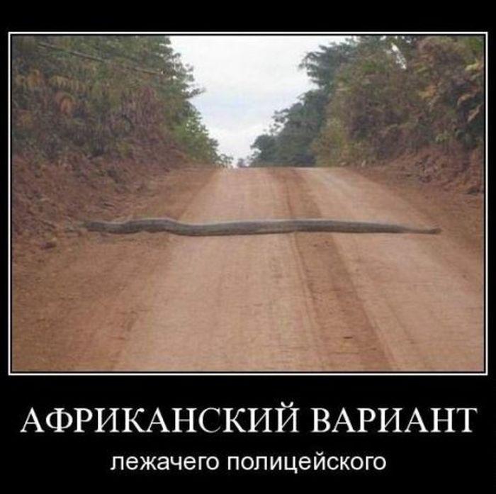 Демотиваторы 28.11.2014 (29 фото)