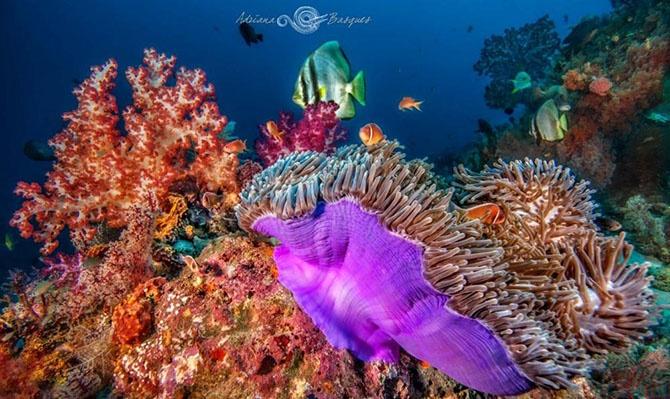 Побег из офиса в яркий мир коралловых рифов (20 фото)