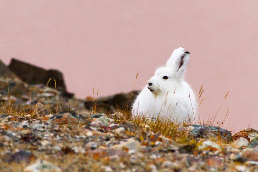 Животные, следующие сезонной моде (10 фото)
