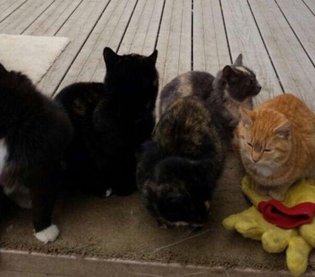«Котвариум» для бездомных кошек (4 фото)