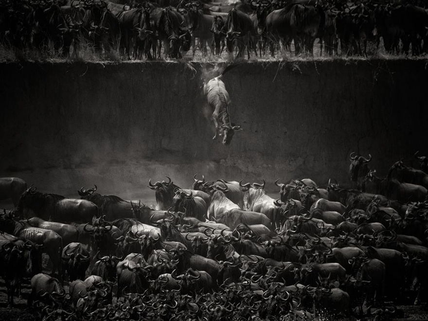 Лучшие фотографии National Geographic ноября 2014 (22 фото)