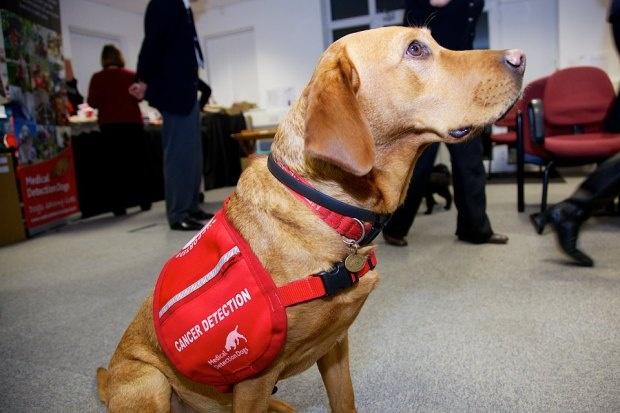 Великобритания: собака обнаружила рак у 550 человек (5 фото)
