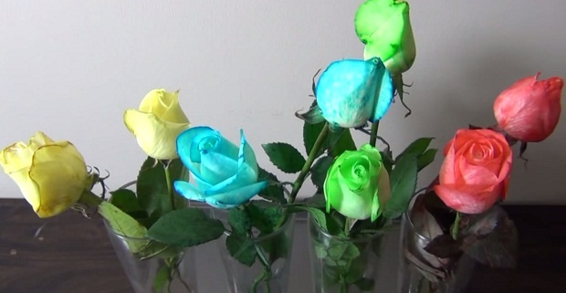 Как сделать букет разноцветных роз (1 фото + 1 видео)