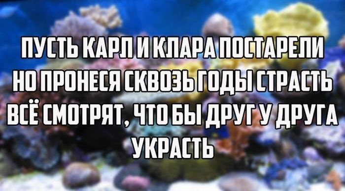 Веселые картинки 04.12.2014 (17 фото)