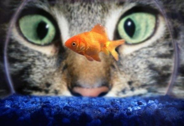 Животные помогут скоротать день (13 фото + 3 гифки)