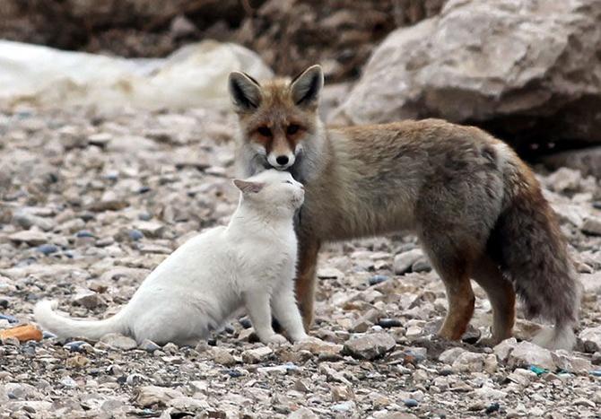 Трогательная дружба между животными (36 фото)