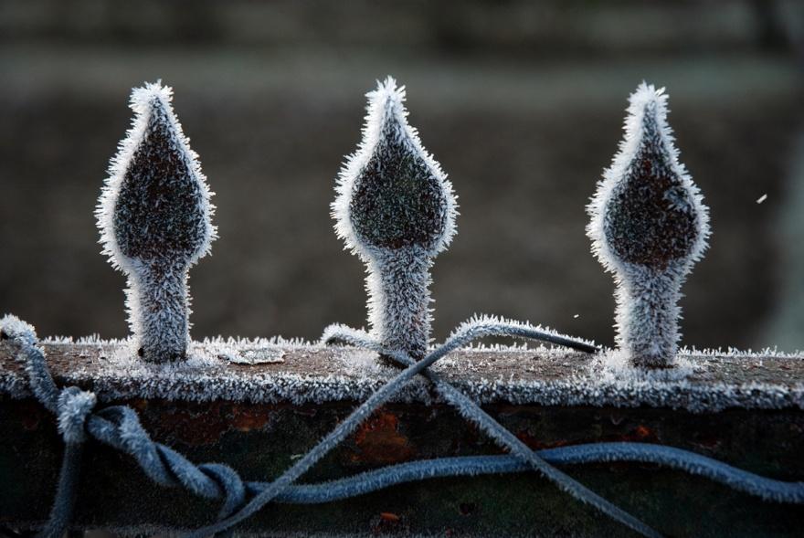 Мороз-художник: шедевры природы (23 фото)