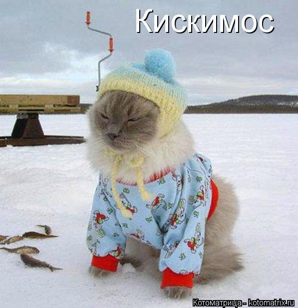 Лучшие котоматрицы 05.12.2014 (50 фото)