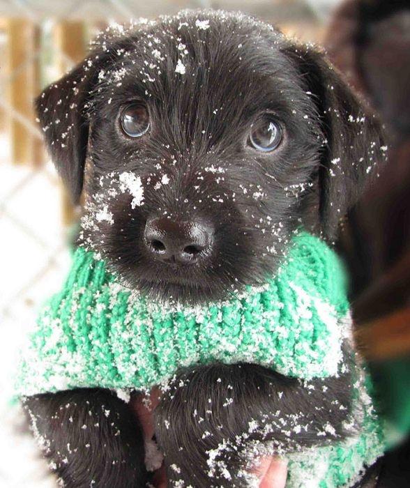 Первый снег в жизни животных (46 фото)