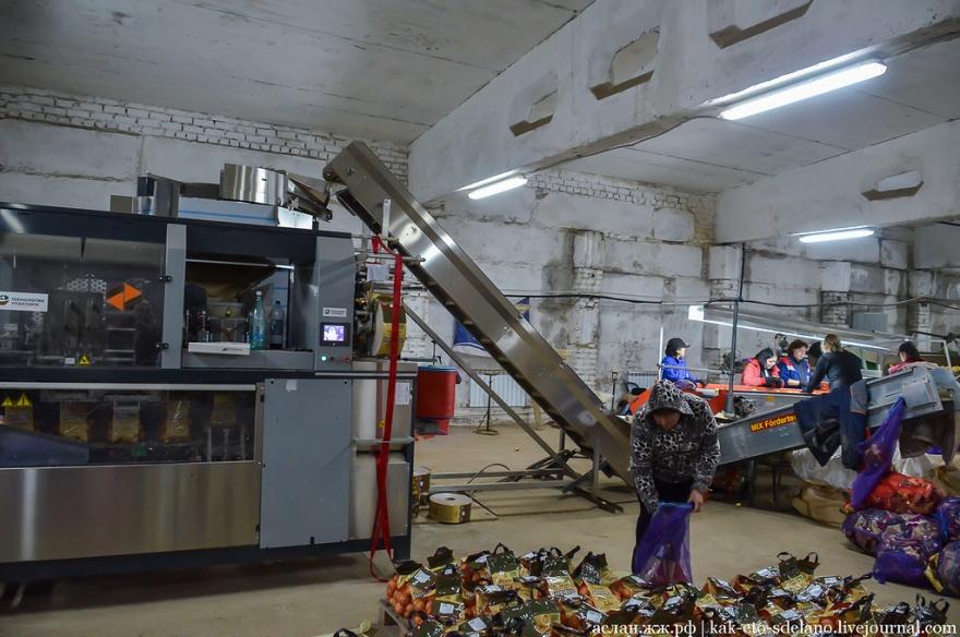 Как выращивают, собирают и обрабатывают картошку (30 фото)