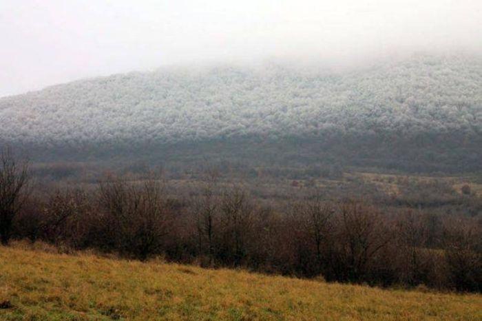 Венгрия: редкий природный феномен в лесу (6 фото)