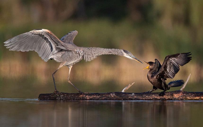 Животные в фотографиях (22 фото)
