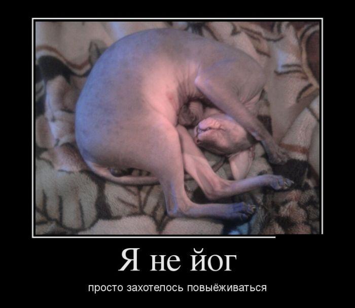 Демотиваторы 15.12.2014 (28 фото)